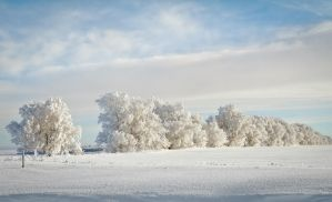 Frost on Trees by dkwynia