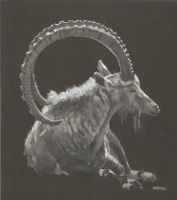 Ibex by bwcopy