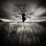 Cold Tree by Loran31