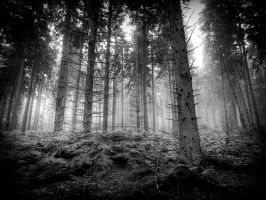 dreams in a landscape format by sparxphoto
