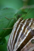 Butterfly Photo 28 by blookz