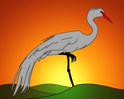 Egret at Sunset by b-a88