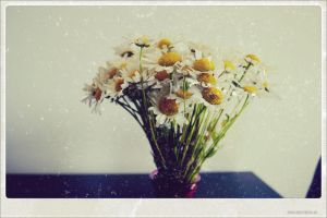 Daisy by TurquoiseGrrrl