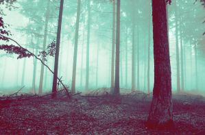 The Forest by DHAVENRI