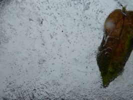 leaf in ice 2 by HellyMr