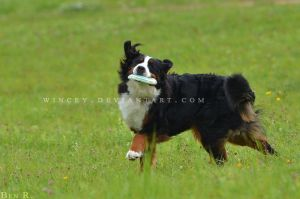 Frisbee Dance by Wincey