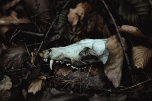 remains by collien
