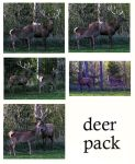 deer pack by syccas-stock