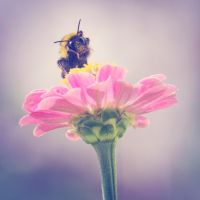 Owning the flower by marinsuslic