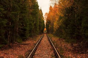 Railroad in forest by Narzull