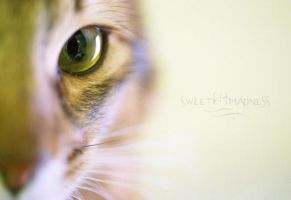 Feline by Sweet---Madness