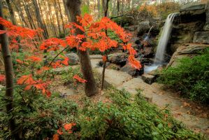 Garv-falls-tree-hdr by joelht74