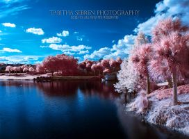 Magical? by TabithaS-Photography
