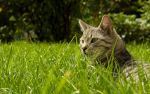 Cat HD widescreen wallpaper by Blue25