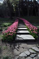 stair with tulips by imFragrance