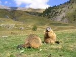 Wild animal stock 104- marmots by Momotte2stocks