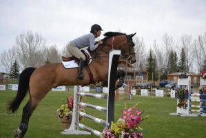 Show Jumping - 4 by Silver-Stock-Images