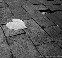Leave Your Heart On The Ground by showyourboness