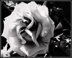 Black and white flower by MeganX0X0