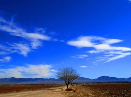 Cold and Blue Skies by SharPhotography