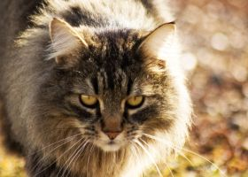 Whiskers Duh by ProcterPhoto