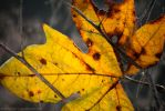 The last leaf by isotophoto