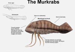 REP: The Murkrabs by Ramul