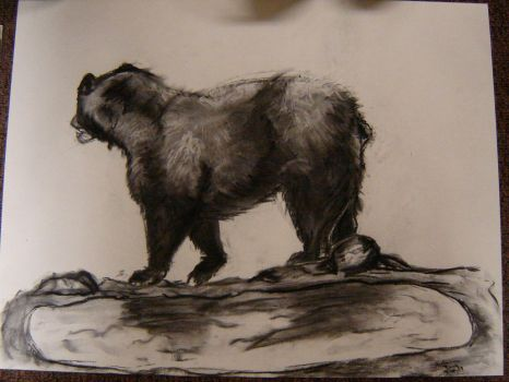 Charcoal Bear by Havoc-16