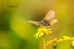 fly away by lovelynaturgraphy
