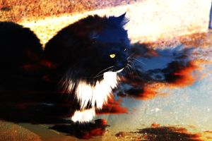 Blackie Sunset Double Exposure by Kairuza