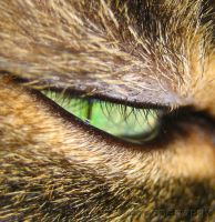 A Cat's Eye by DrowningSignificance