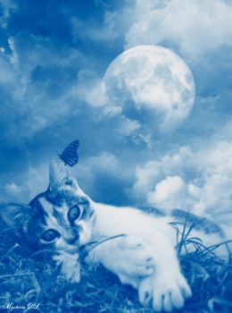 My Kitty's Blue Paradise by mysteria-dl