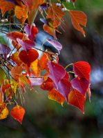 Autumn Leaves 11-22-13 by Tailgun2009