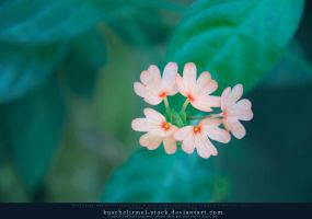 Tiny Flower by kuschelirmel-stock