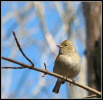 birdy2 by jamesboy