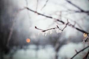 Winter by Sangvinar