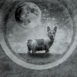 theDog by anapt
