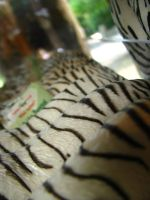 pretty patterns Nashville Zoo by TheNormal1