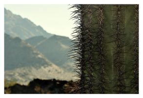 Saguaros are awesome by hell0z0mbie