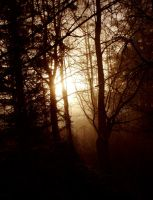 Morning in the deep forest by Henriksen