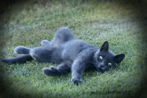 Six the Russian Blue by KateIndeed