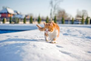 Cat in Snows by VUFox