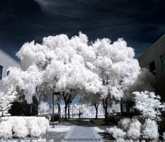 Straightforward Path Infrared by ilimel