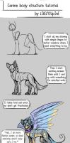 Canine Body Structure Tutorial by LikelyLupine