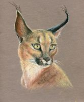 Caracal by Egretink