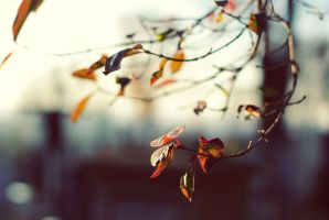Autumn fragment 56 by cheshirekster