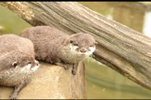 Otter by Just-the-way-Im-not