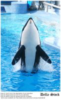 Sea World: Shamu Jump by Della-Stock