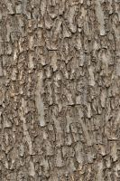 Seamless tree bark OMG by hhh316