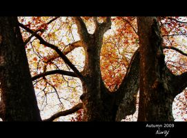 Autumn branches by niwaj